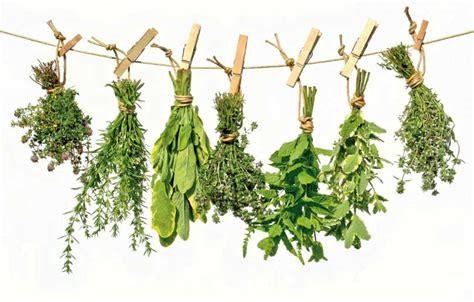 Definición de Plantas Medicinales   Qué es y Concepto