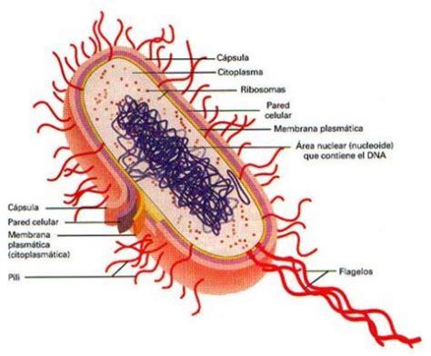 Definición de Procariota » Concepto en Definición ABC