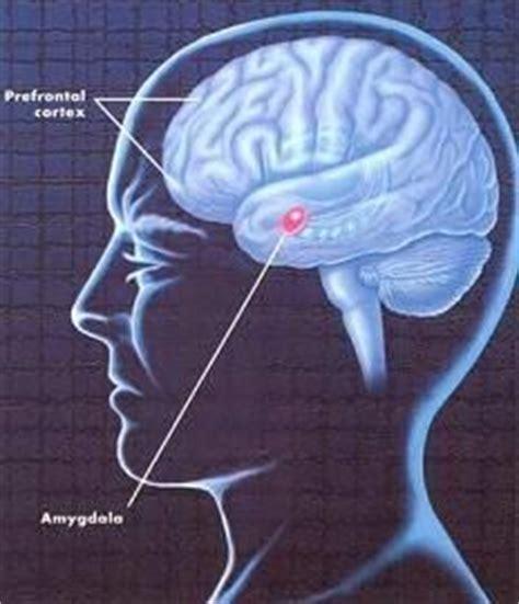 Definición de psicopatología   Qué es, Significado y Concepto
