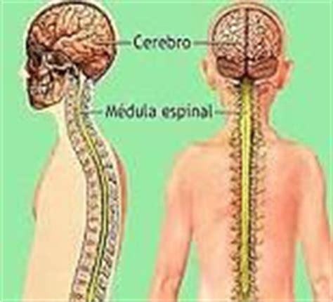 Definición de sistema nervioso periférico - Qué es ...