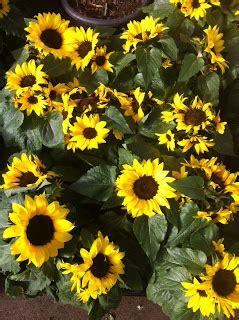 Delantales y Manteles: Comprar flores y Plantas Super ...