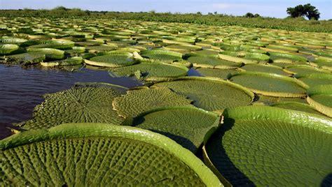 Denuncian la depredación de plantas acuáticas amenazadas ...