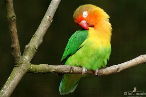 Denuncian venta ilegal de aves exóticas en calles de La ...