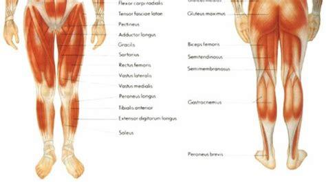 Deportes en ingles: Musculos de las piernas en ingles.