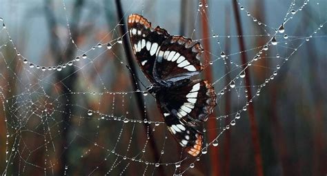 Depredadores de las mariposas