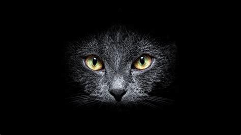 Descargar 1920x1080 gatos negros oscuros animales fondo de ...