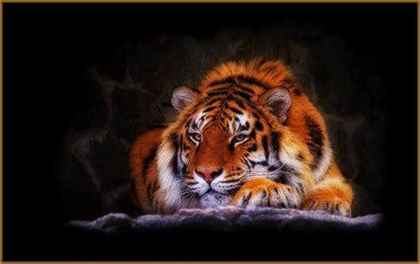 descargar fondo de pantalla tigres de aragua Archivos ...