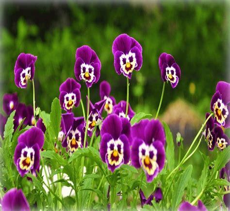 Descargar Gratis Imagenes De Flores Exoticas Para ...