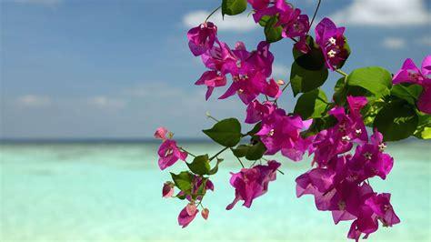 Descargar la imagen en teléfono: Plantas, Paisaje, Flores ...
