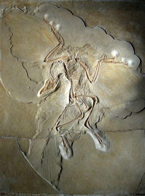 Descendientes de los dinosaurios en la actualidad