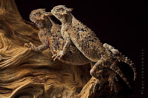 Descendientes de los Dinosaurios...   Imágenes   Taringa!