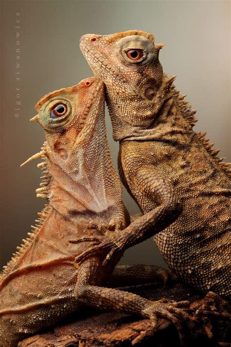 Descendientes de los Dinosaurios...   Taringa!