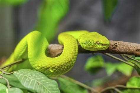 Descubre cómo se mueven las serpientes, ¡no te lo puedes ...