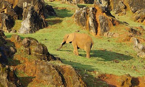 Descubre el Parque de la Naturaleza de Cabárceno   Groupon ...