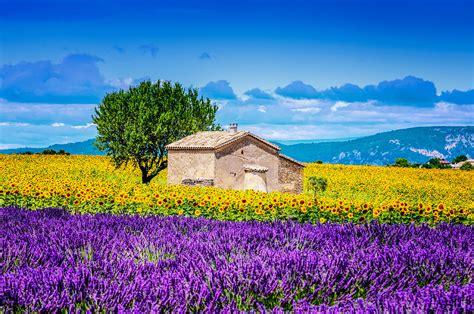 Descubre los campos de lavanda en La Provenza francesa