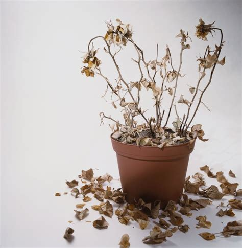 Descubre por qué se te mueren las plantas