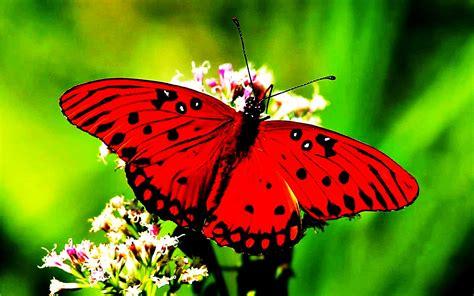 Descubriendo la vida: Mariposas, animales de buena suerte