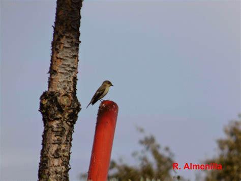 Descubriendo las aves de Madrid Sur: RUTA POR LOS ...