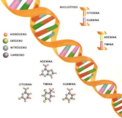 DESCUBRIMIENTOS DEL ADN timeline   Timetoast timelines