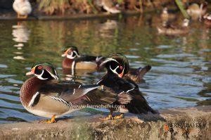 Descuentos para conocer el Zoo de Santillana del Mar