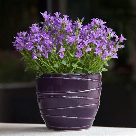 Design For Indoor Flowering Plants Ideas #21100