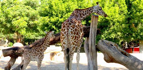 Destinos para conocer la fauna del planeta: zoos en Madrid ...