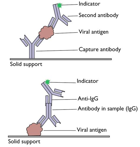 Detection of antigens or antibodies by ELISA