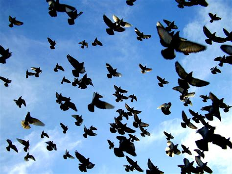 Día Mundial de las Aves, ¿te imaginas un mundo sin aves?
