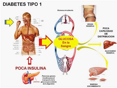 Diabetes Causas efectos y como controlarla: Que es la ...