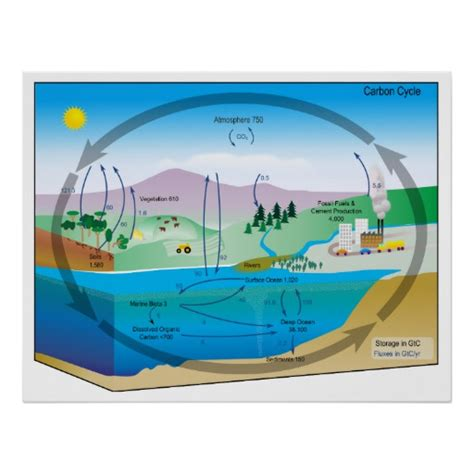 Diagram of the Biogeochemical Carbon Cycle Posters | Zazzle