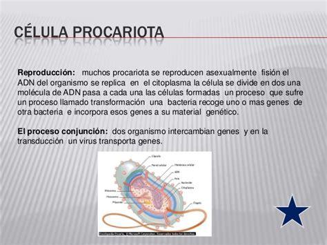 Diapositivas de la celula