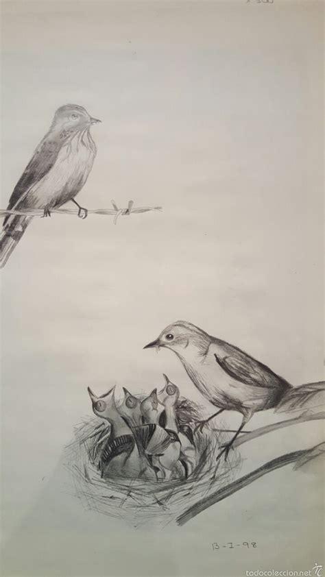dibujo a lapiz, pajaros, nido - Comprar Dibujos ...