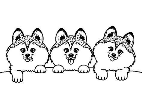 Dibujo de 3 perritos para Colorear   Dibujos.net