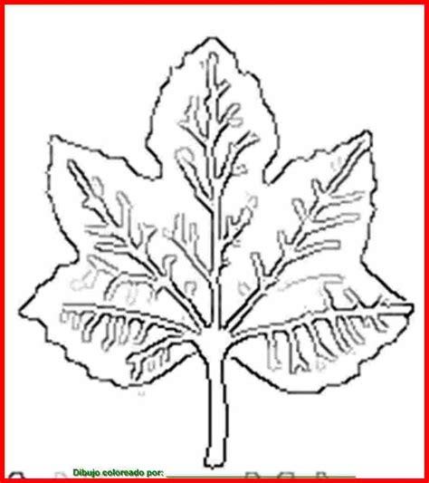 dibujo de hoja de planta para colorear e imprimir.