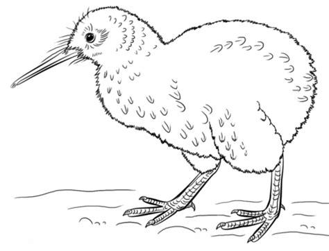 Dibujo de Kiwi para colorear | Dibujos para colorear ...
