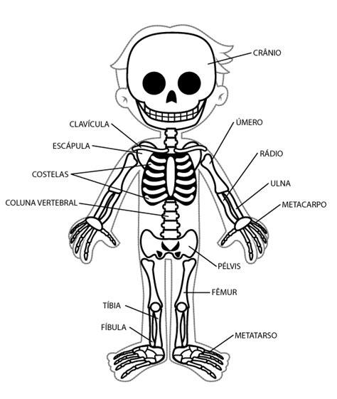 Dibujo De Los Sistemas Del Cuerpo Humano Para Colorear ...