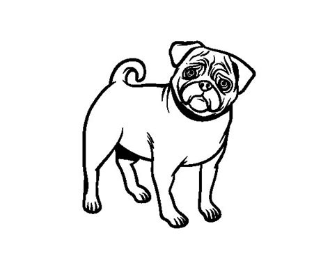 Dibujo de Perro carlino para Colorear   Dibujos.net