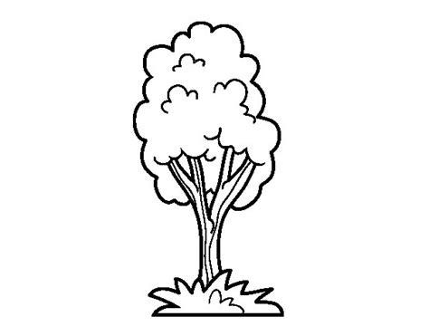 Dibujo de Un árbol de parque para Colorear   Dibujos.net