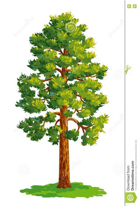 Dibujo Del Vector Del árbol De Pino Ilustración del Vector ...