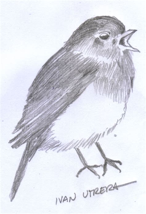 dibujo pájaro a lápiz | Ivan Utrera