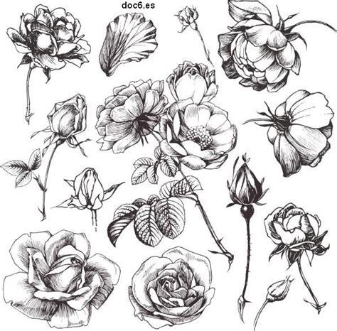 Dibujos de flores   Revista Entretiene