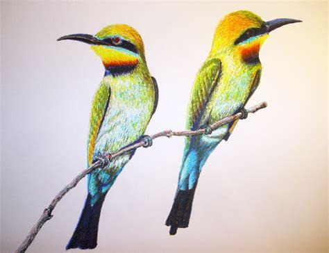 Dibujos de pajaros a color - Imagui