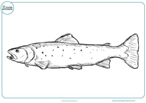 Dibujos de pescado para colorear - Mundo Primaria