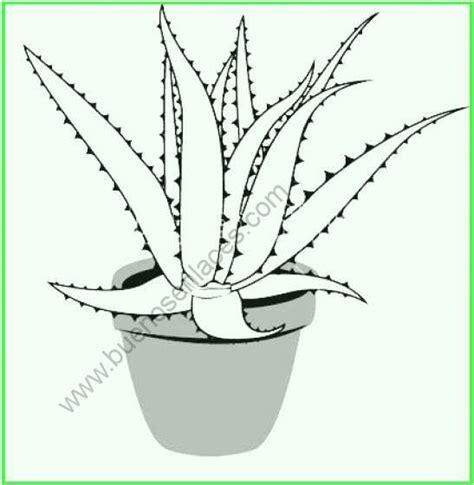 Dibujos de plantas medicinales para colorear