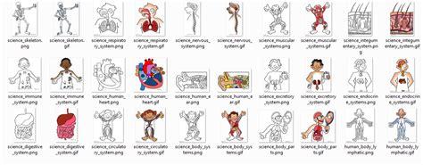 Dibujos del cuerpo humano para niños | Diario Educación