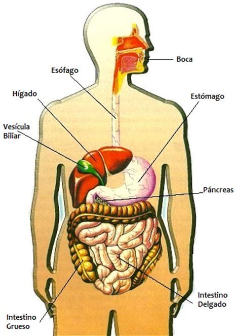 DIBUJOS IMAGENES BIOLOGIA SISTEMA APARATO: IMAGENES DEL ...
