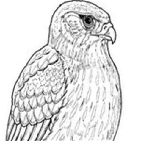 Dibujos para Calcar y Crear - Dibujos para pintar y colorear