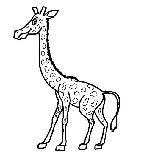 Dibujos para colorear > Animales - Jirafas