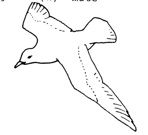 Dibujos para colorear de Aves, Plantillas para colorear de ...