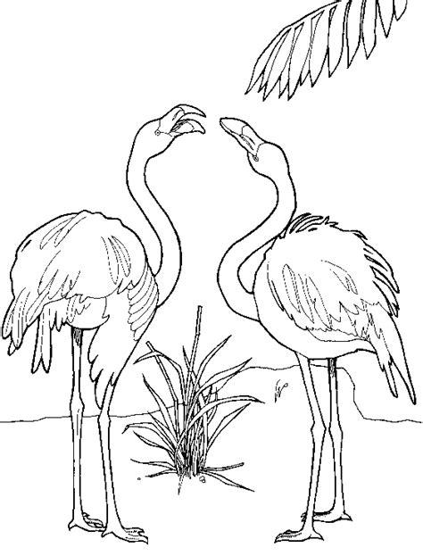 Dibujos para colorear de Flamencos, Phoenicopterus ...